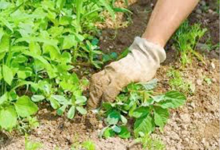 Giardinaggio 3